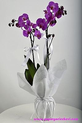 Mor Orkide (2 Dal )