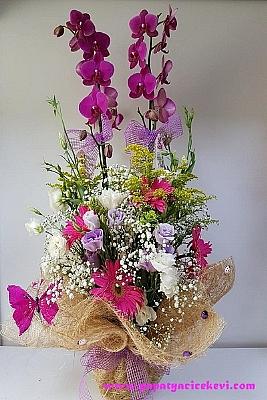 Fuşya Orkide & Mevsim Çiçekleri