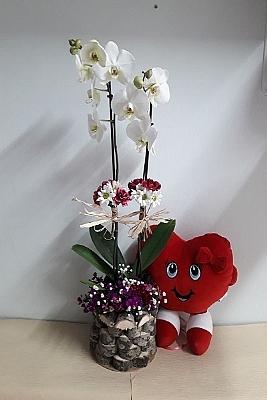 kalp yastık ve çift dal orkide