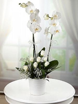 Beyaz Güller ve Orkide